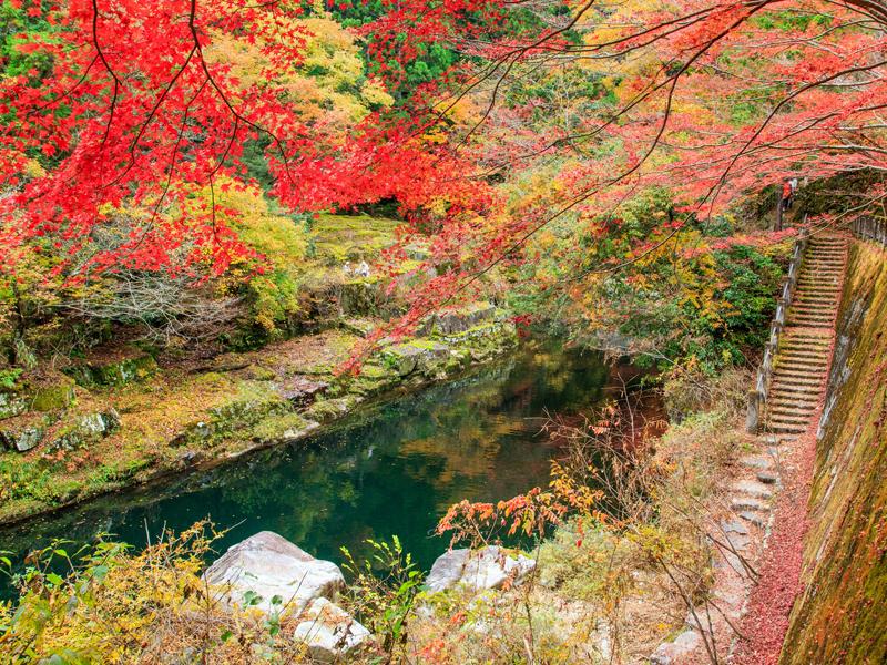 行楽の秋、津山周辺で愉しむ紅葉シーズン
