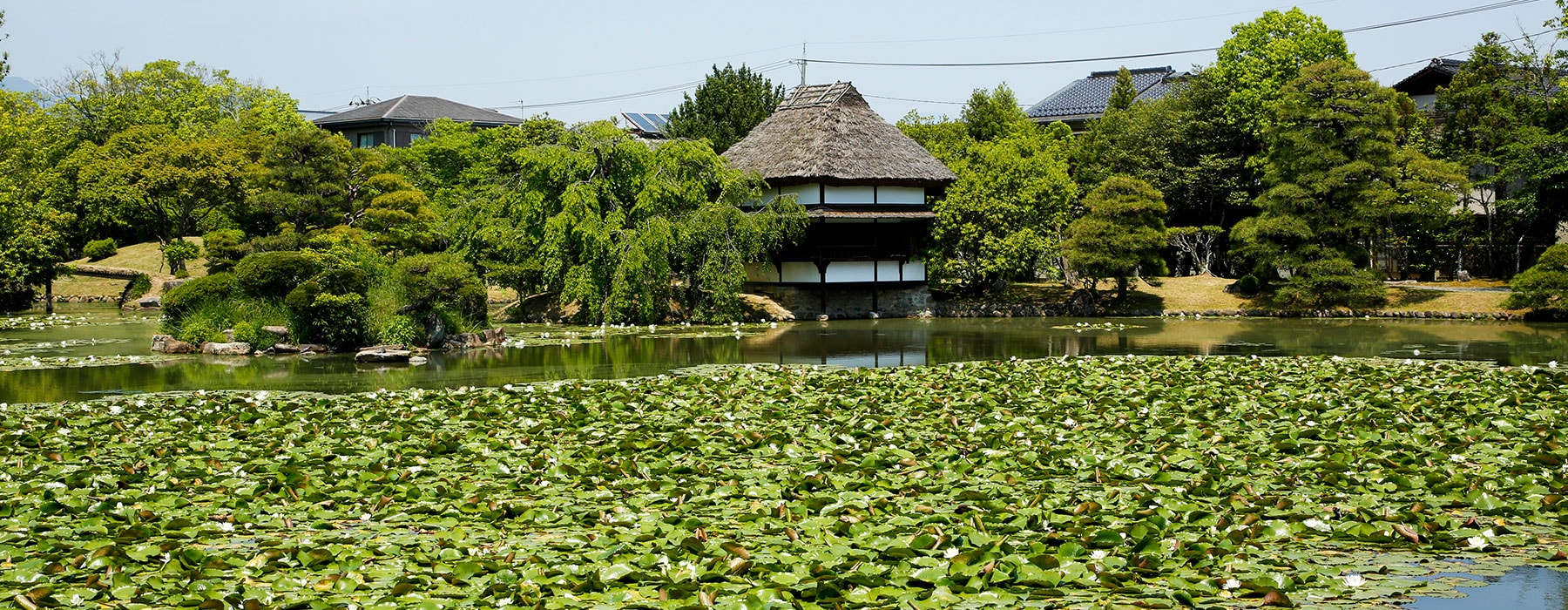 Local Attractions(Gardens & Nature)